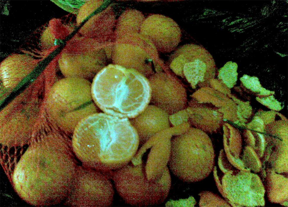jeruk manis