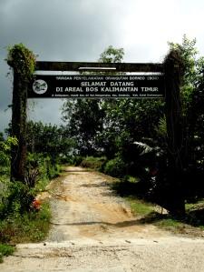 Borneo Orang Utan Survival