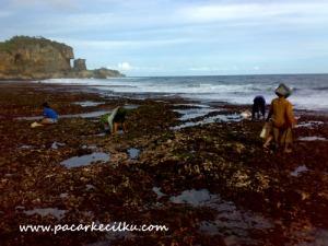 disore hari,disaat air laut surut,warga lokal mencari kerang untuk lauk pauk