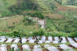 jalan menuju Curug Mrawu