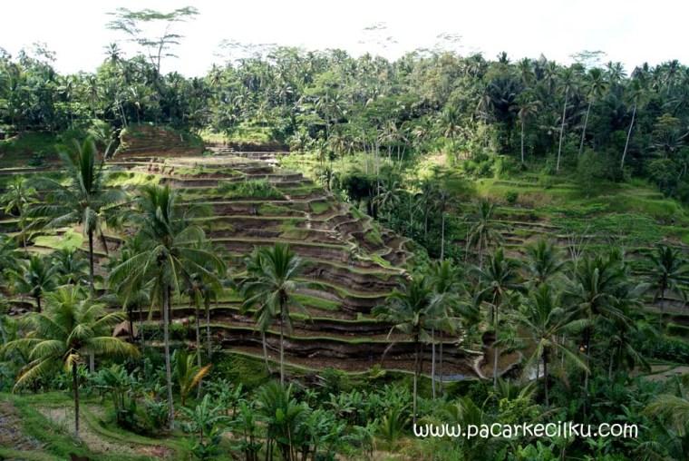 Ceking Terrace Tegallalang