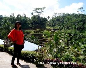 Ceking Terrace di Tegallalang