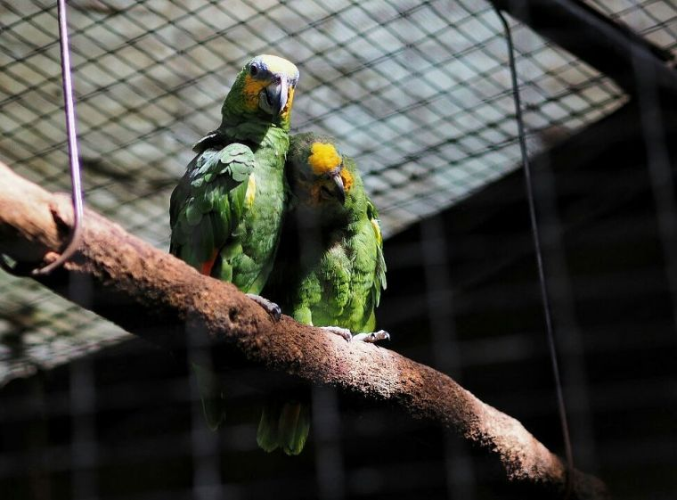 Nuri Amazon
